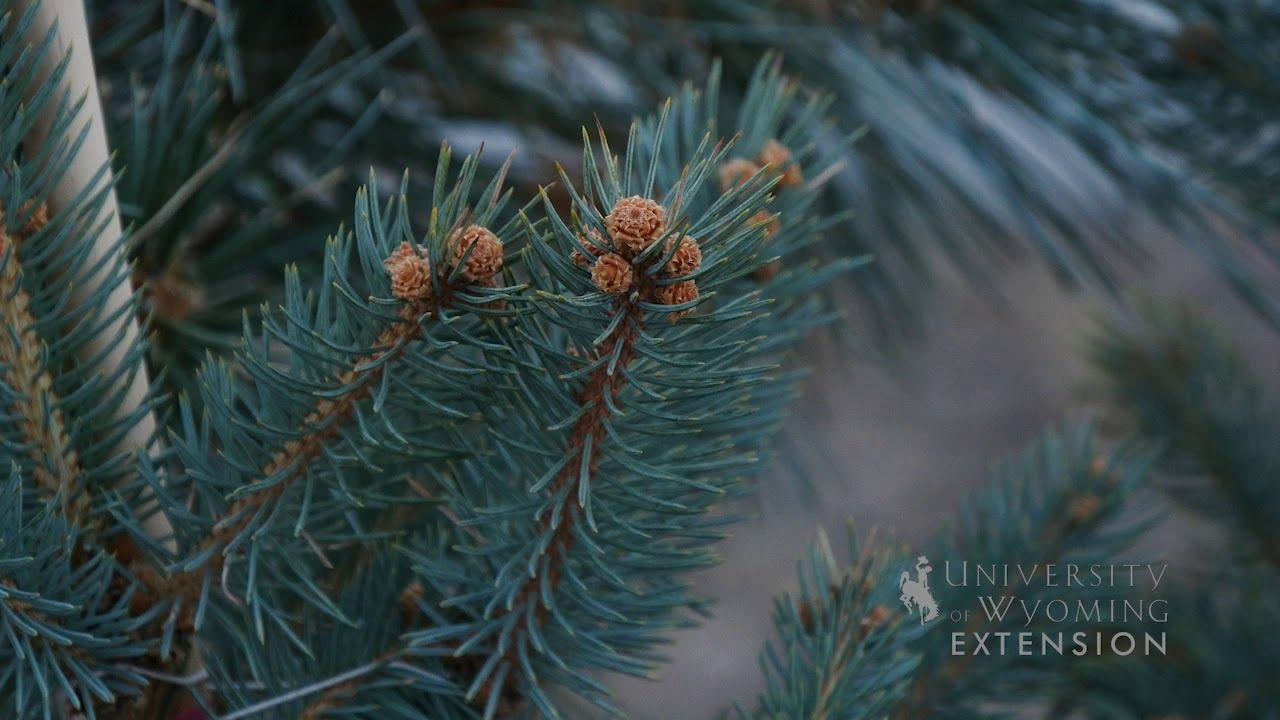 Living Christmas Tree | From the Ground Up | Live christmas trees, Live tree, Lawn and garden