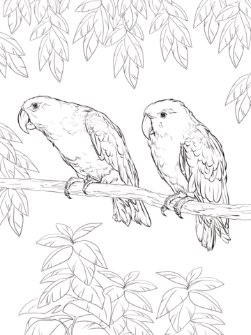 Eclectus Parrot coloring page from Parrots category. Select from ...