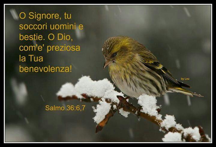 Salmo 36:6-7