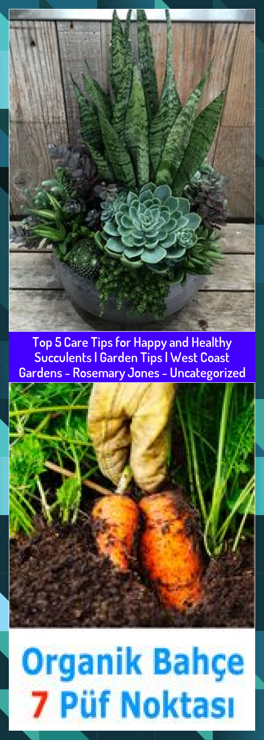 Top 5 Care Tips for Happy and Healthy Succulents  Garden Tips  West Coast Gardens  Rosemary Jones  Uncategorized