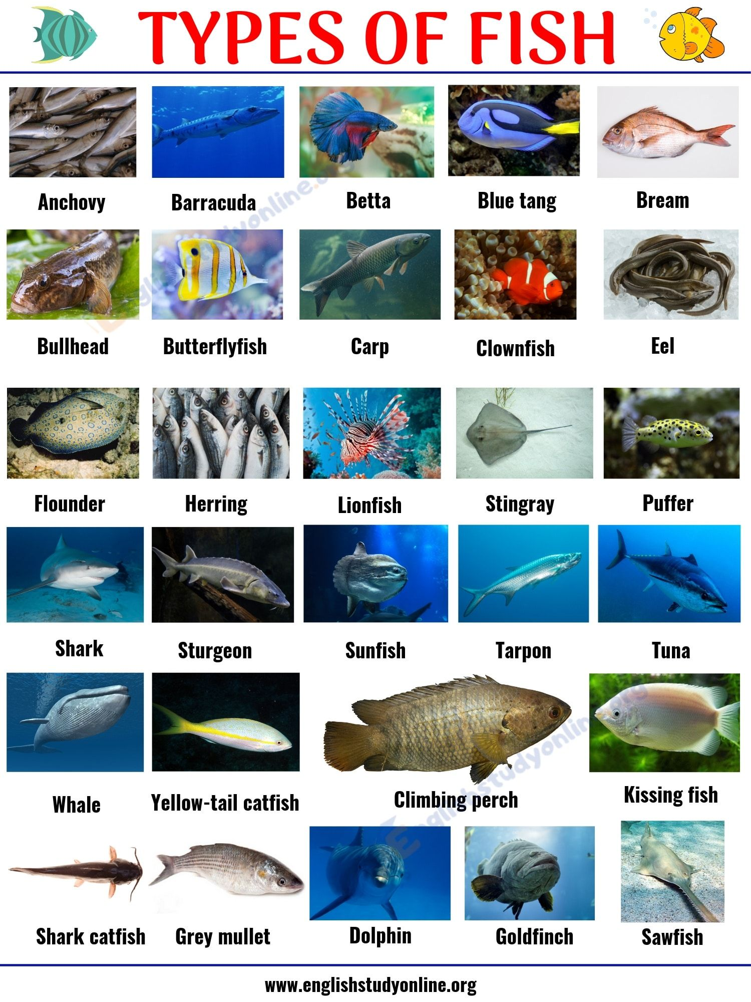 Types Of Fish List Of 29 Popular Fish Names With Pictures In English In 2020 Types Of Fish Fish Fish Chart