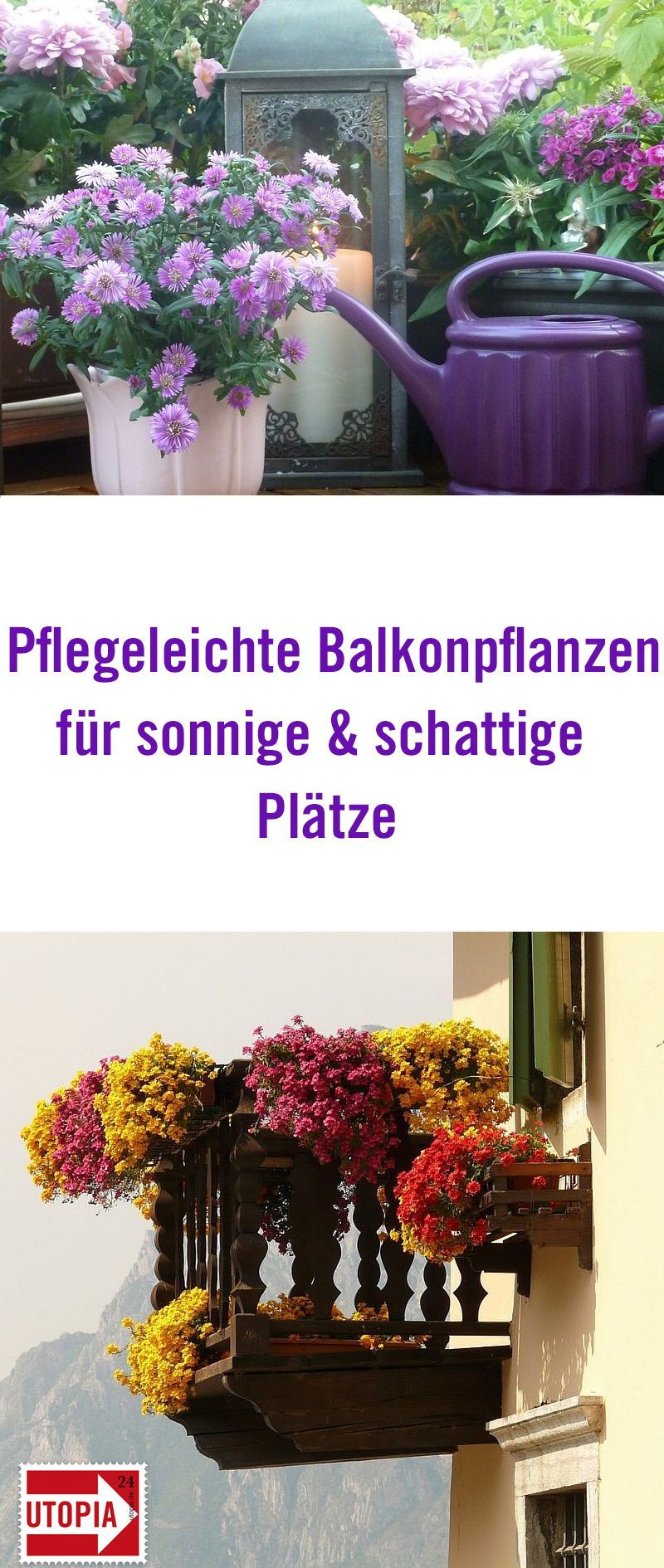 balkonpflanzen pflegeleichte sorten f r sonnige und schattige pl tze urban gardening gem se. Black Bedroom Furniture Sets. Home Design Ideas
