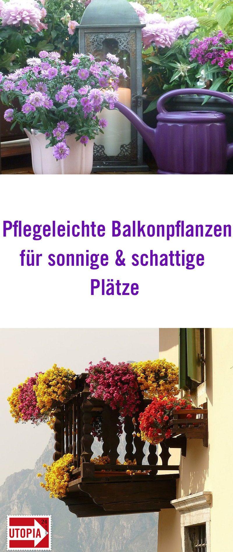balkonpflanzen pflegeleichte sorten f r sonnige und schattige pl tze balkonpflanzen der. Black Bedroom Furniture Sets. Home Design Ideas