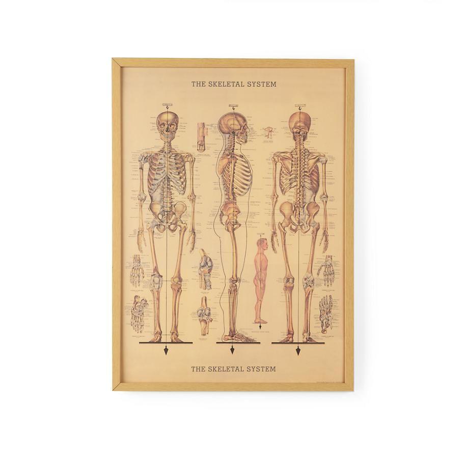 Kids\' Posters, Prints & Art: Human Skeleton Wall Art in Framed Wall ...