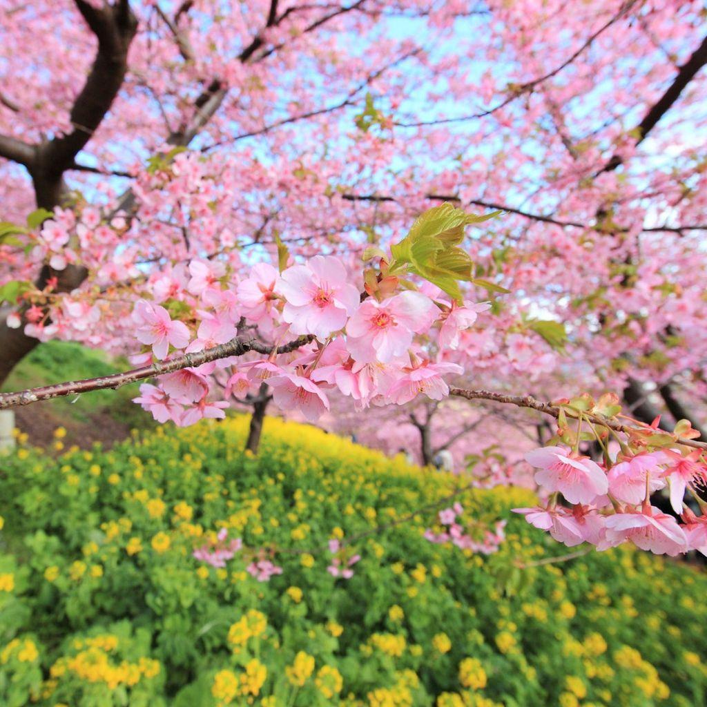 Cool Spring Wallpapers: IPad, IPad 2, IPad Mini Spring Wallpapers HD, Desktop