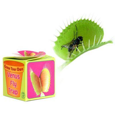 INGENIU Prendas, Jogos e Gadgets alucinantes: Planta Carnívora Venus Fly Trap  Uma caixinha cheia de surpresas!  Daqui vai nascer uma planta que tem tanto de animalesca como de divertida e bonita.  Os insectos que se cuidem!  GYVENU  Preço Para Si: 8,99 €