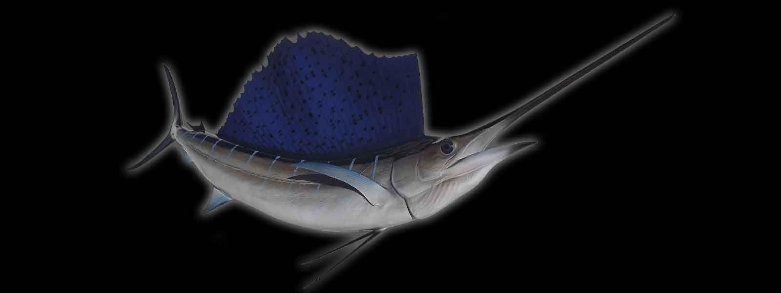 Pin by craig026 on rohanrj fish mounts fish