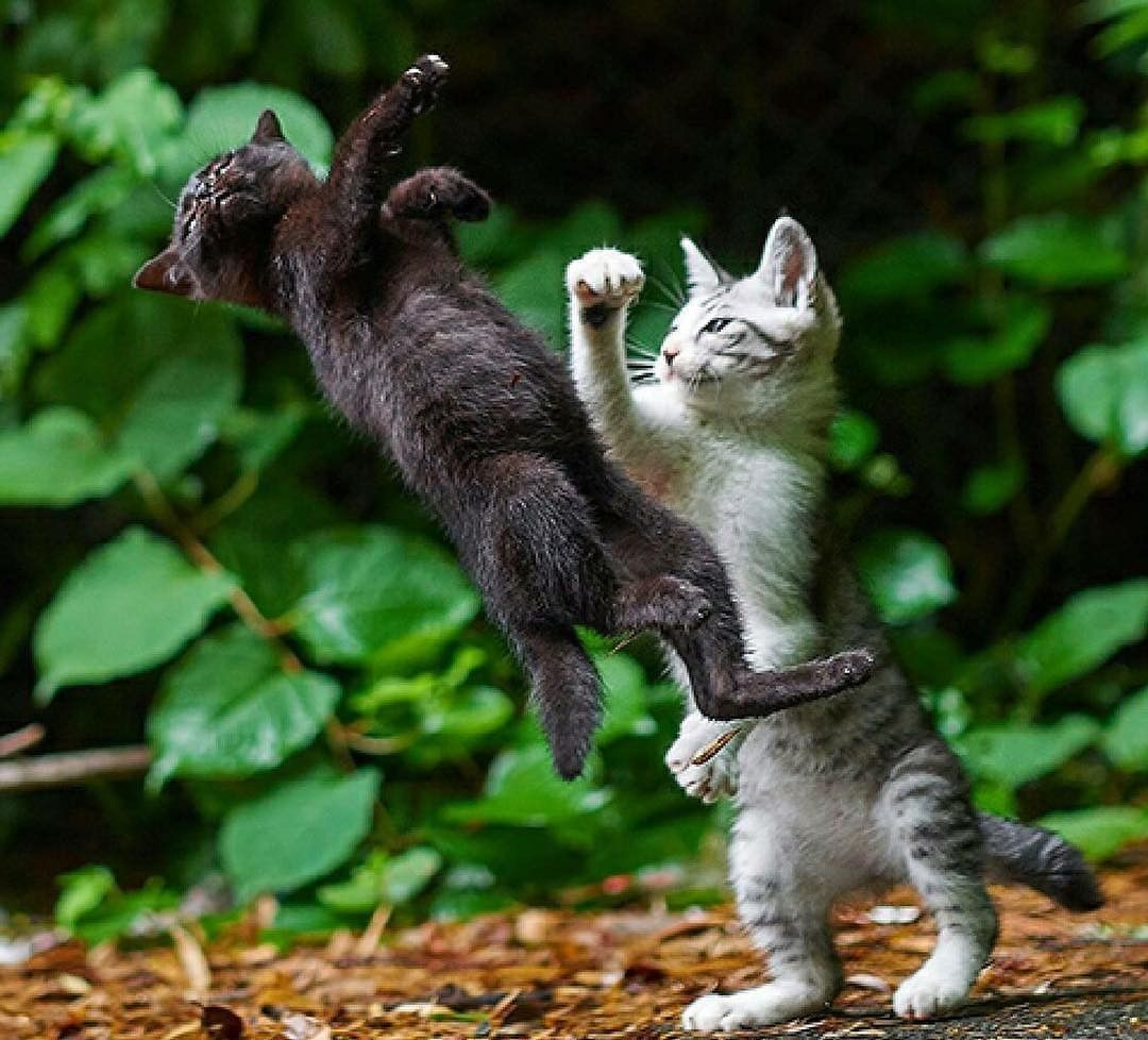 Без кота и жизнь не смешна