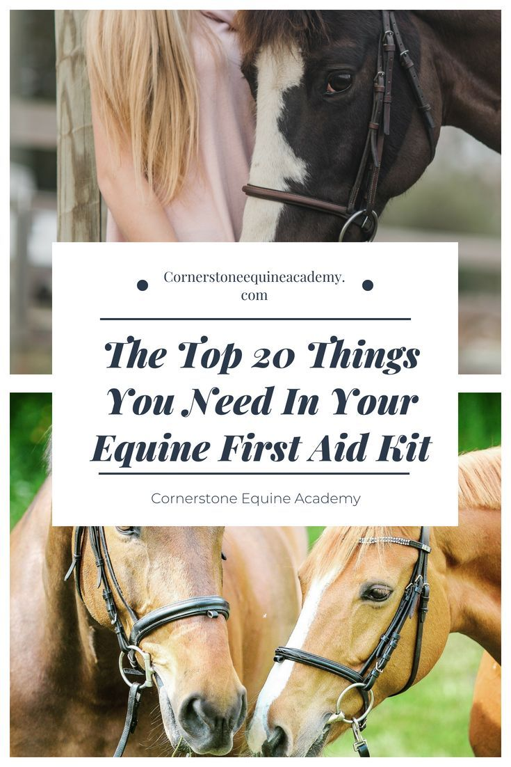 An equine first aid kit is a necessity on any farm and is