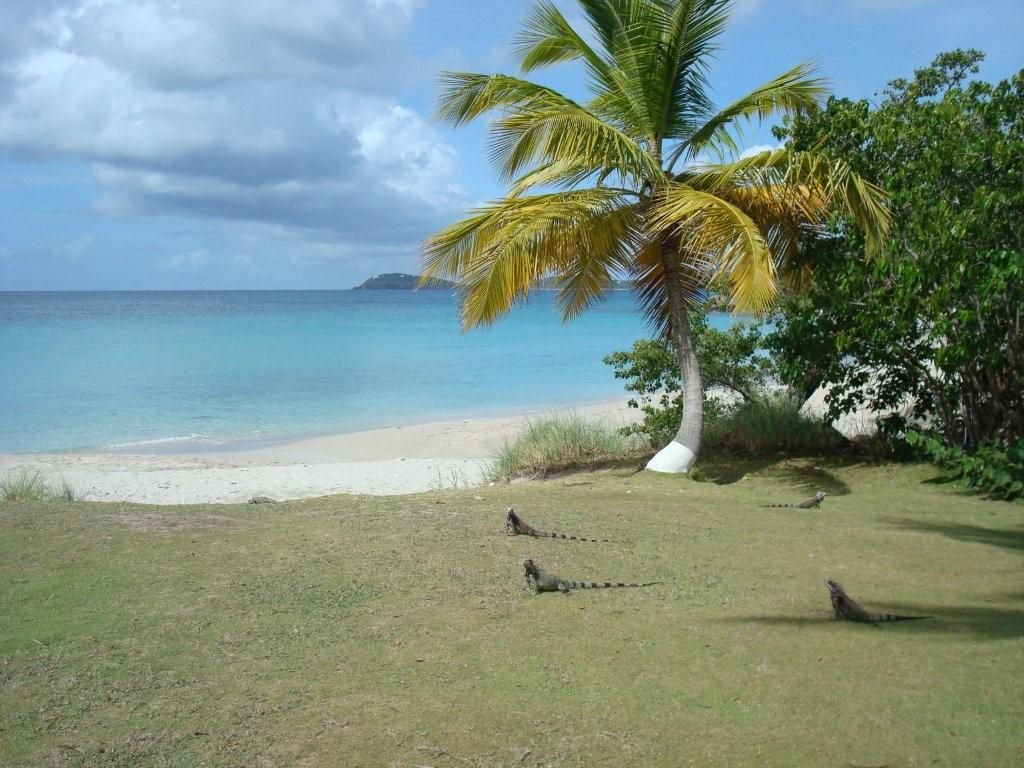Limetree Beach St Thomas Usvi Have Not Stayed At Resort But Went For Dinner Next To Bolongolo Nice And Good Food