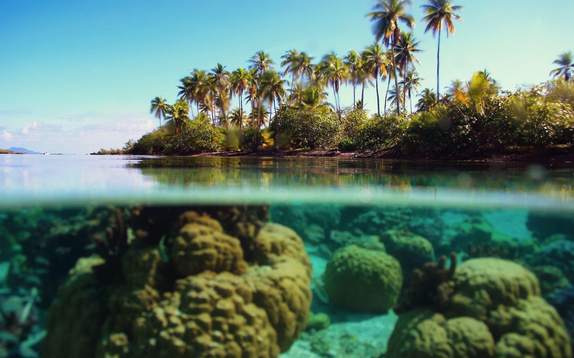 Half Underwater Half Above Ocean Wallpaper Underwater Wallpaper Nature Wallpaper