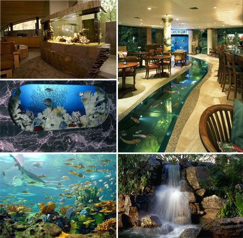 Great Living Art Aquatic Design   Custom Aquariums, Reefs, Ponds, Waterfalls And  Maintenance