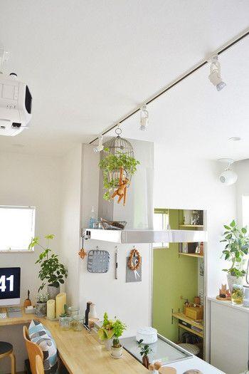 吊るして楽しむ 植物がトレンド すぐできるハンギングプランツの素敵