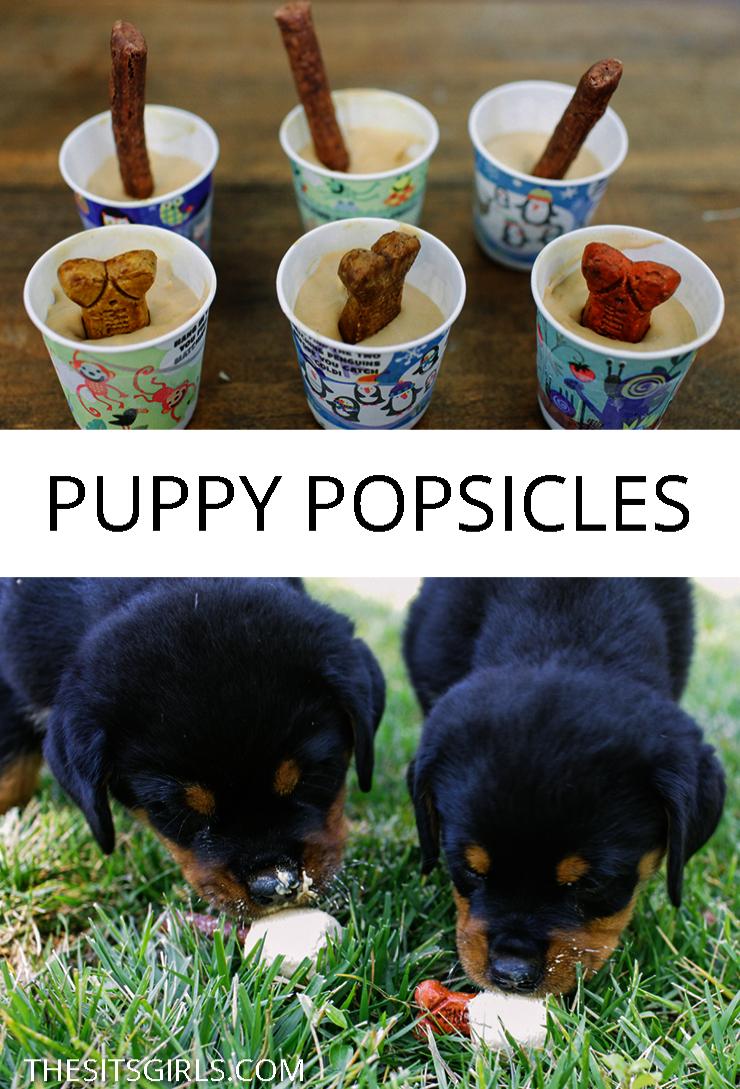 Dog Accessories Kmart Dog Accessories Clipart Puppy Popsicles Frozen Dog Frozen Dog Treats