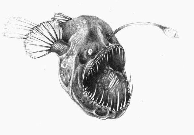 Angler Fish Drawing Cute images   Angler fish tatoo   Pinterest ...