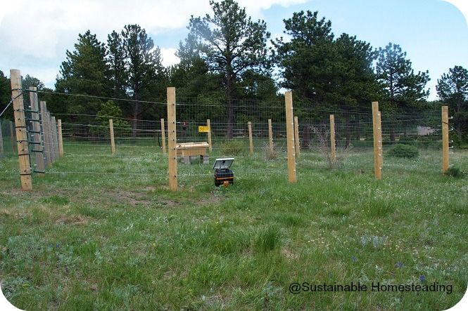Bear Proof Fence How To Build A Bear Proof Beehive Fence