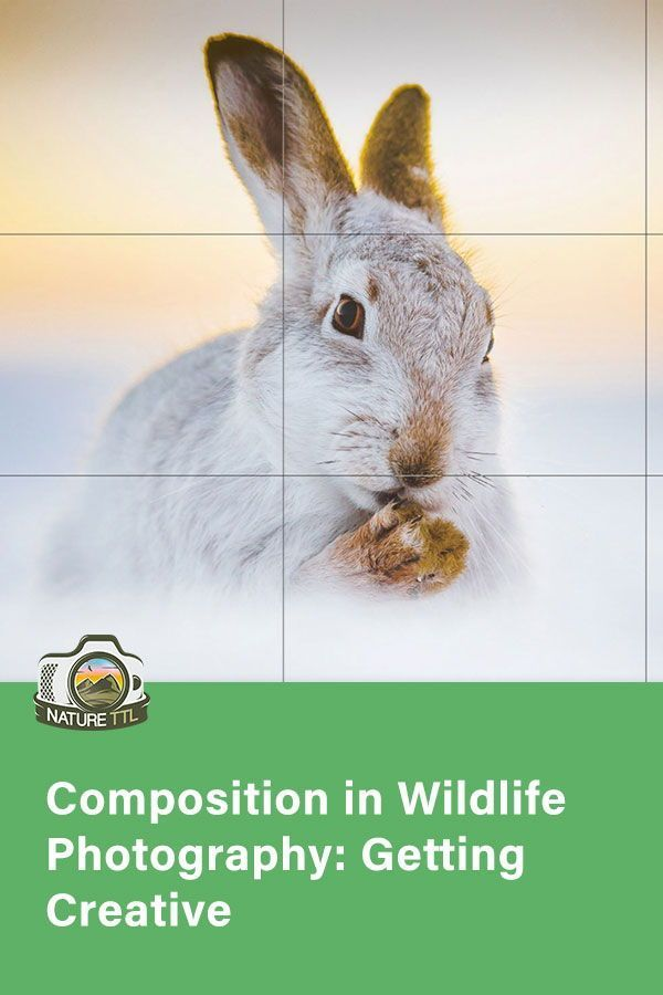 Composition can make or break an image! In this article, learn how best  to compose your wildlife images and photos creatively.