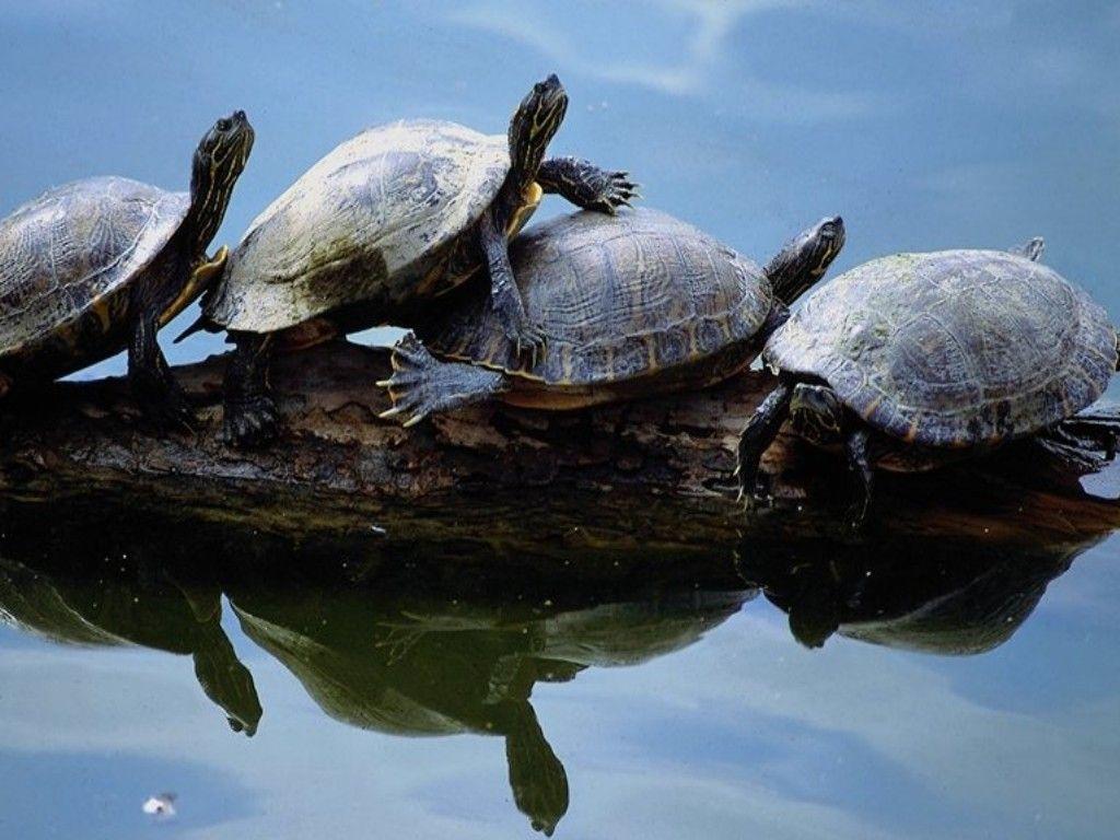 Nett Süße Malvorlagen Von Schildkröten Galerie - Malvorlagen Von ...