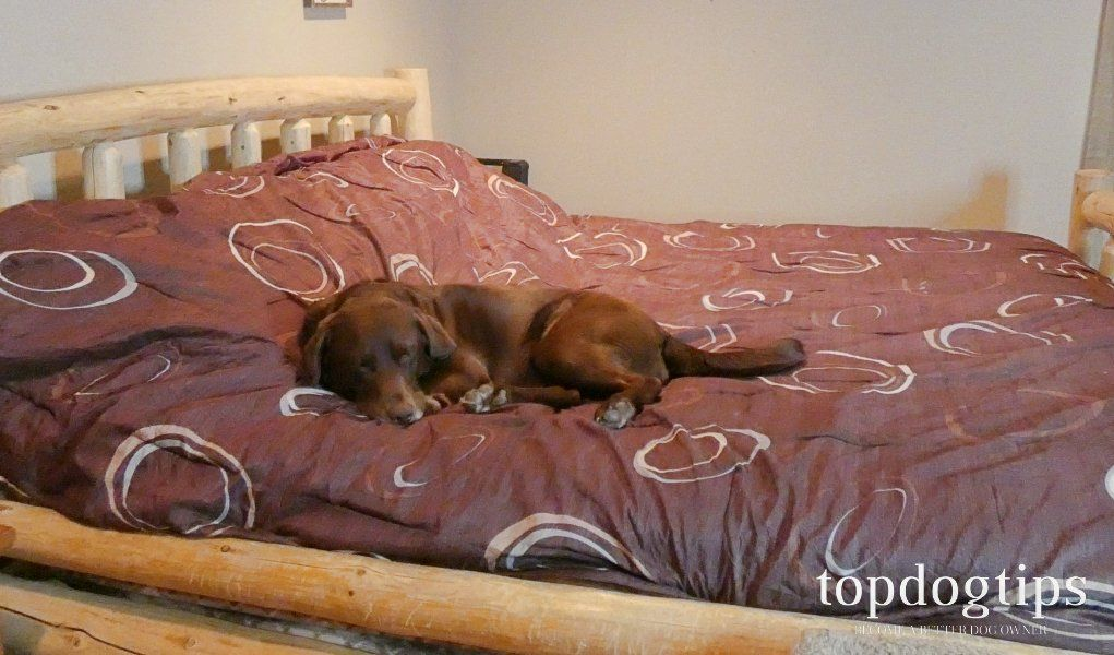 How to keep dog off bed in 10 simple steps sleeping dogs