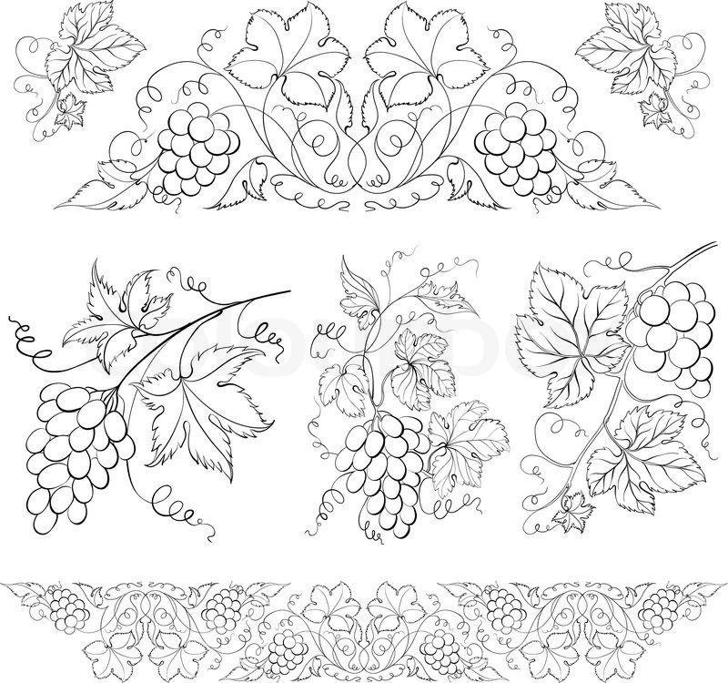 Narisovannyj Vinograd Cvetochnye Raskraski