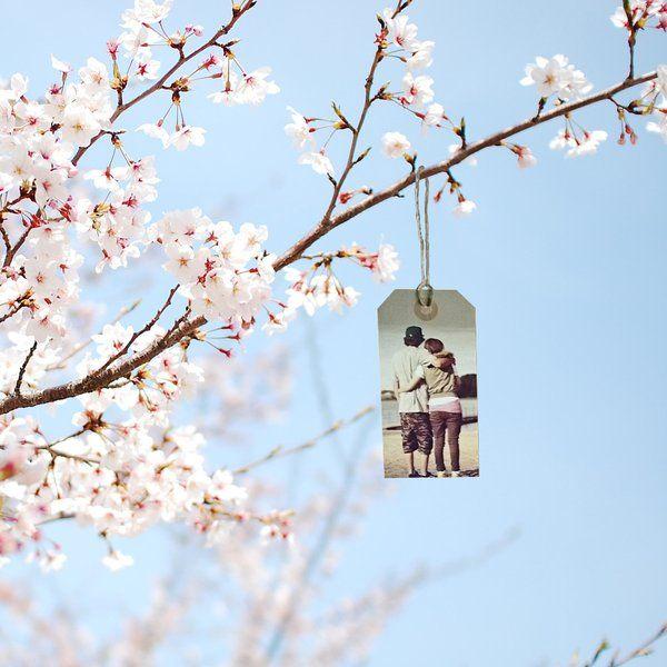 Wishing Branch Wishingbranch Cherry Blossom Wallpaper Spring Wallpaper Flower Wallpaper