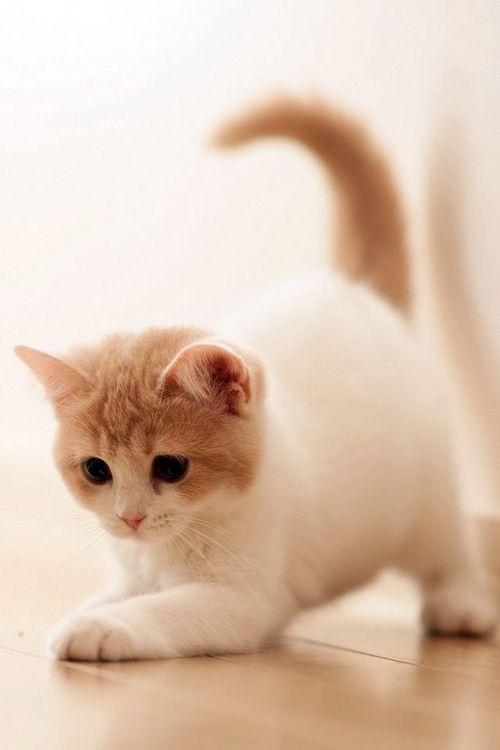 Put Some Cute On Your Desktop With These Wallpapers Cute Baby Cats Cute Cat Wallpaper Kittens Cutest