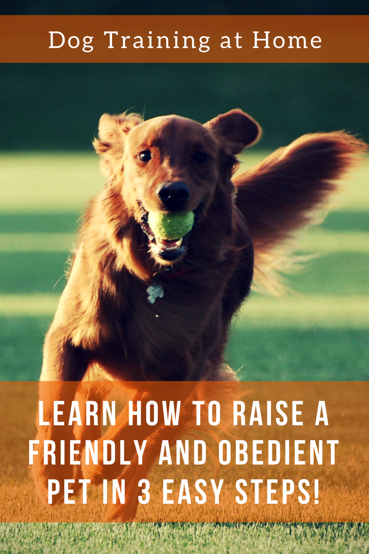 Dog training at home - what to do and where to start 5