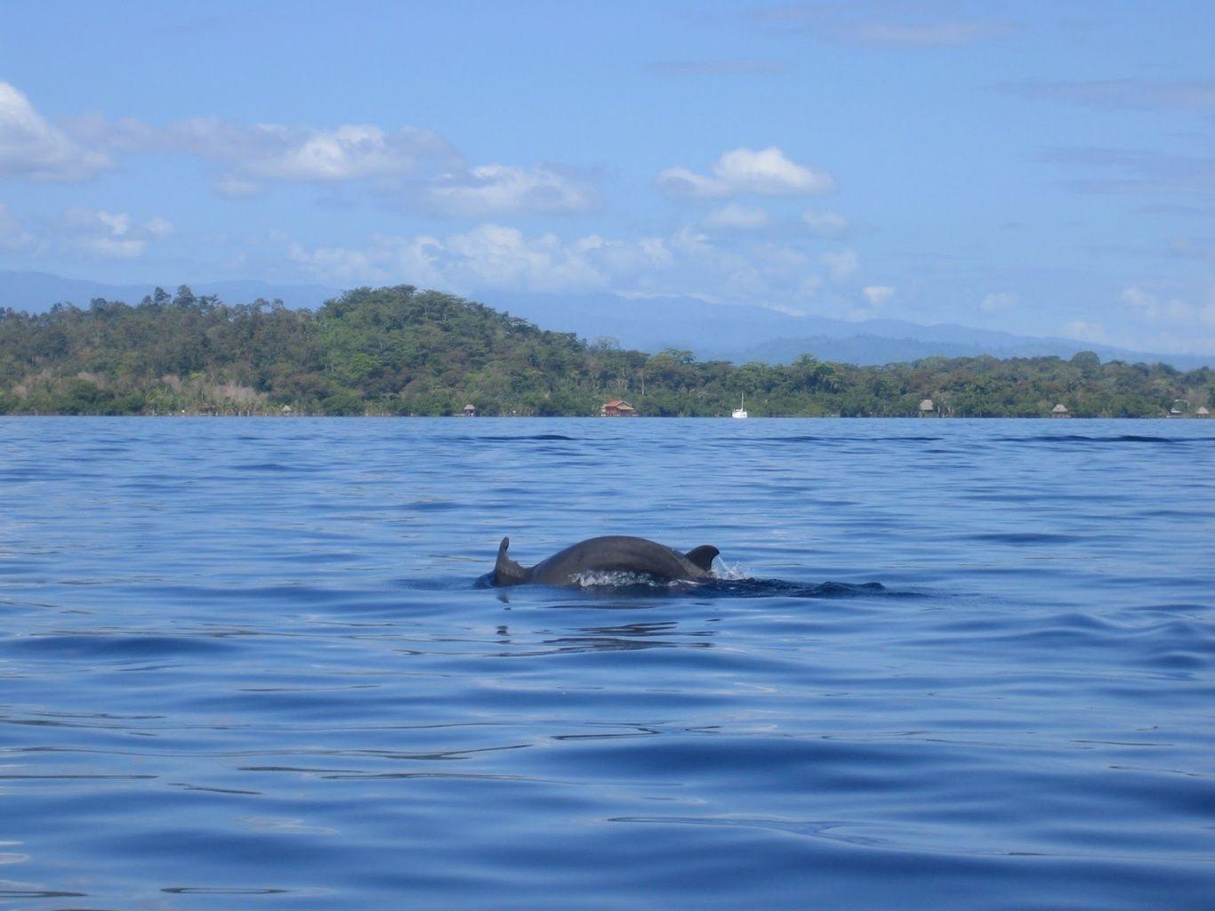 Bahía de los Delfines. Bocas del Toro, Panamá.