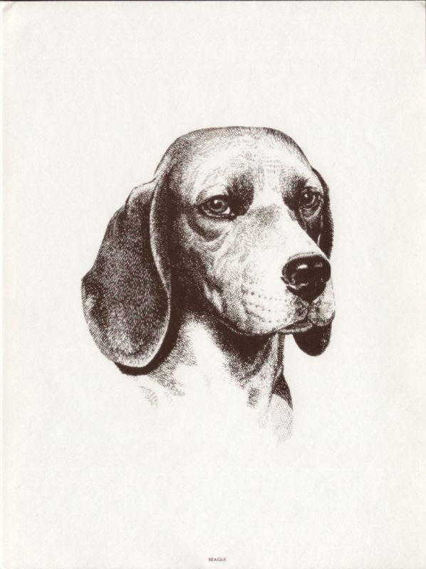 Beagle Beagle Fever Beagle Art Beagle Dog Cute Beagles