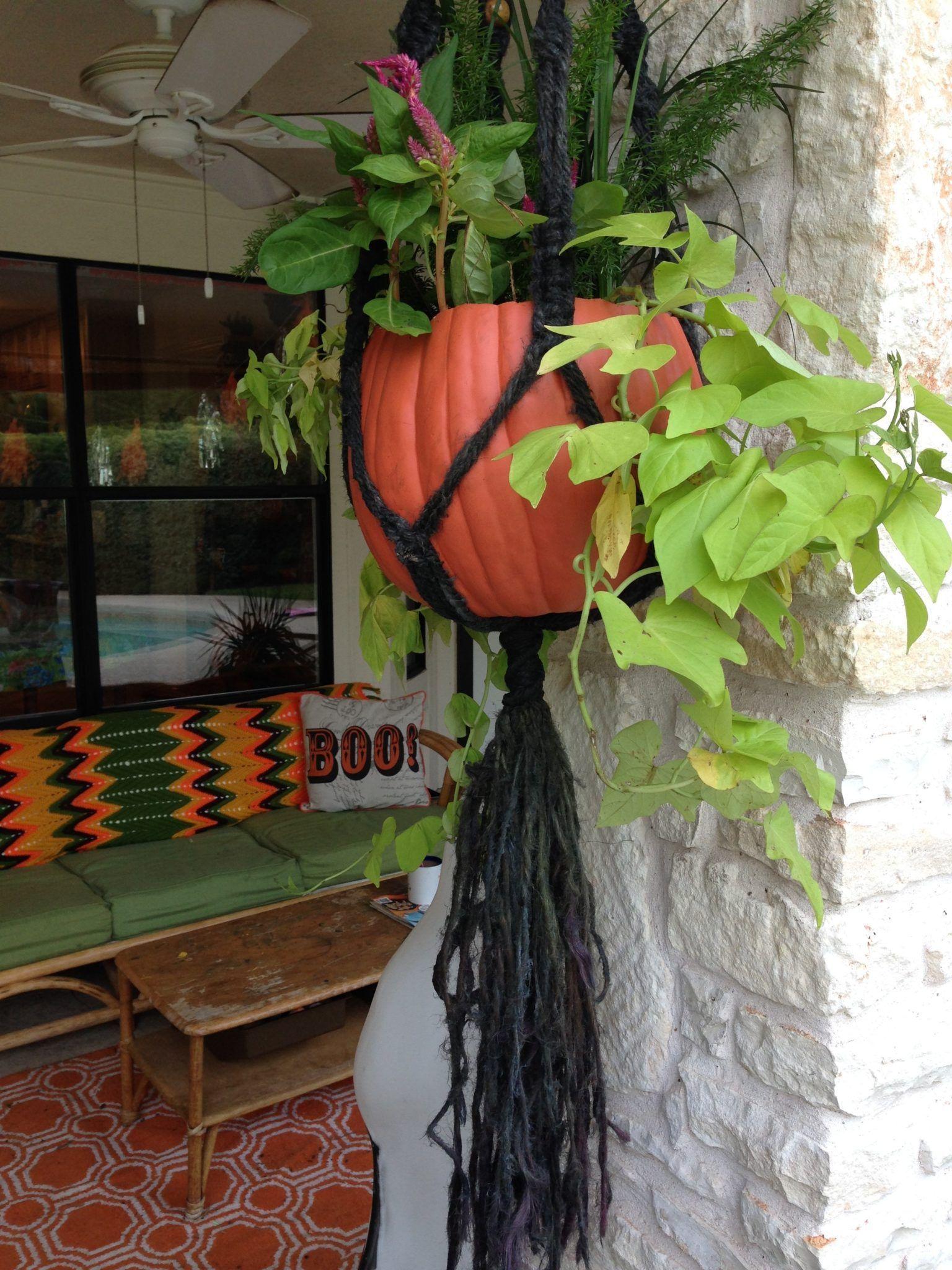 hanging plants holder diy #Hangingplantsindoordiy #hangingplantsindoor hanging plants holder diy #Hangingplantsindoordiy #hangingplantsindoor