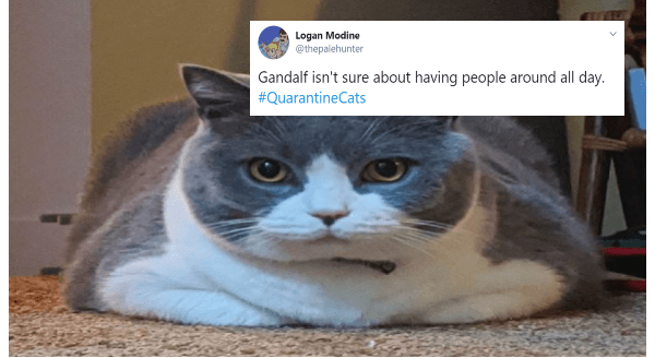 With Their Humans Being Constantly At Home Cats Have Varied Reactions Tweets In 2020 Kitten Pictures Cat Memes Cats