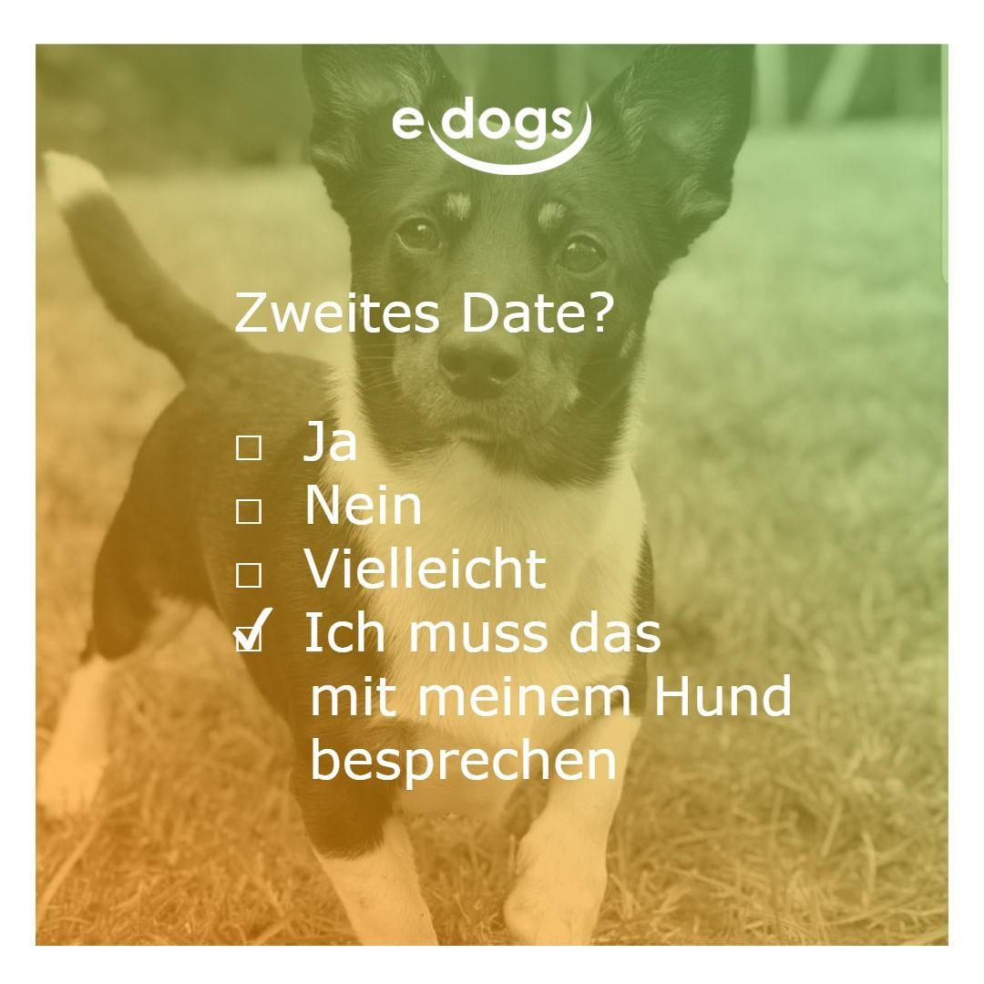 Zweites Date Muss Ich Mit Meinem Hund Besprechen Hundeliebe Edogs Traumhund Hundezitate Hundemensch Hundespruche Zi Hund Zitat Hundespruche Hunde