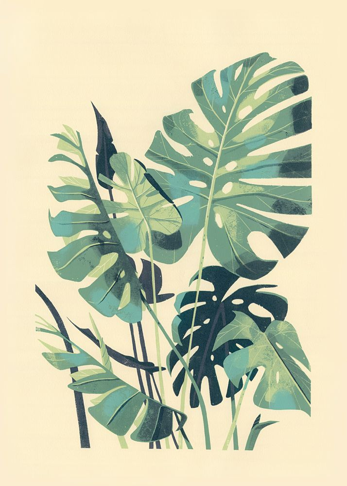 monstera deliciosa 4 color hand pulled silkscreen print on rives printmaking paper