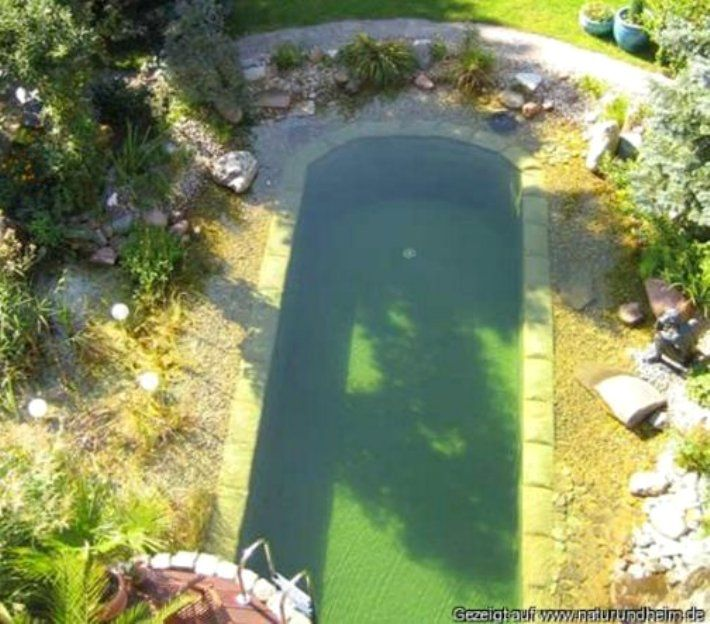 Natural swimming pool many plants used to filter are for Pond plant filter