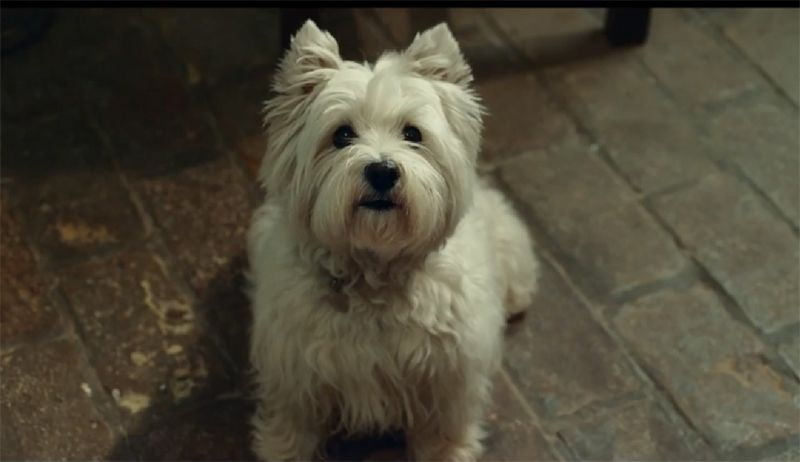 Video The Most Beautiful Dog Food Commercial Ever Most