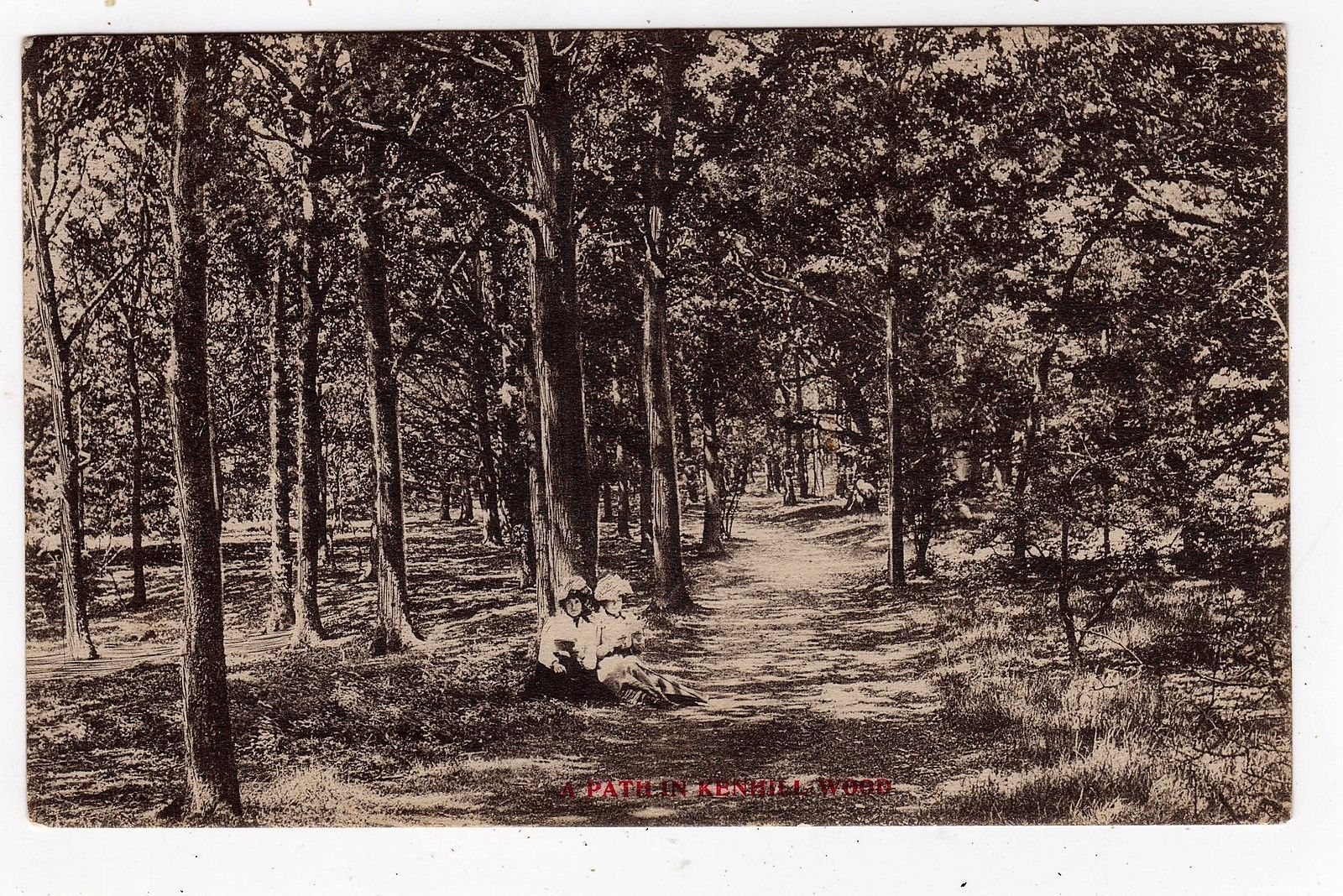 NORFOLK, SNETTISHAM, KENHILL WOOD, FOOTPATH, 1905   eBay