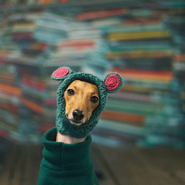 kermit or cermet dogs with stuff on their heads pinterest