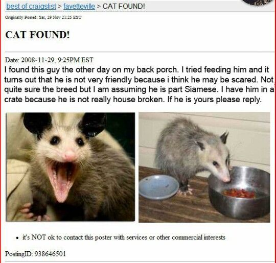 It's my cat give him to me (With images) Opossum, Funny