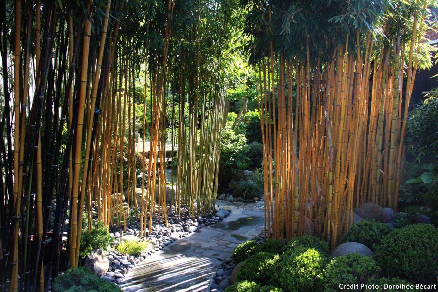Un Jardin Japonais Aux Portes De Lille Jardin Japonais Les Plus Beaux Jardins Jardins