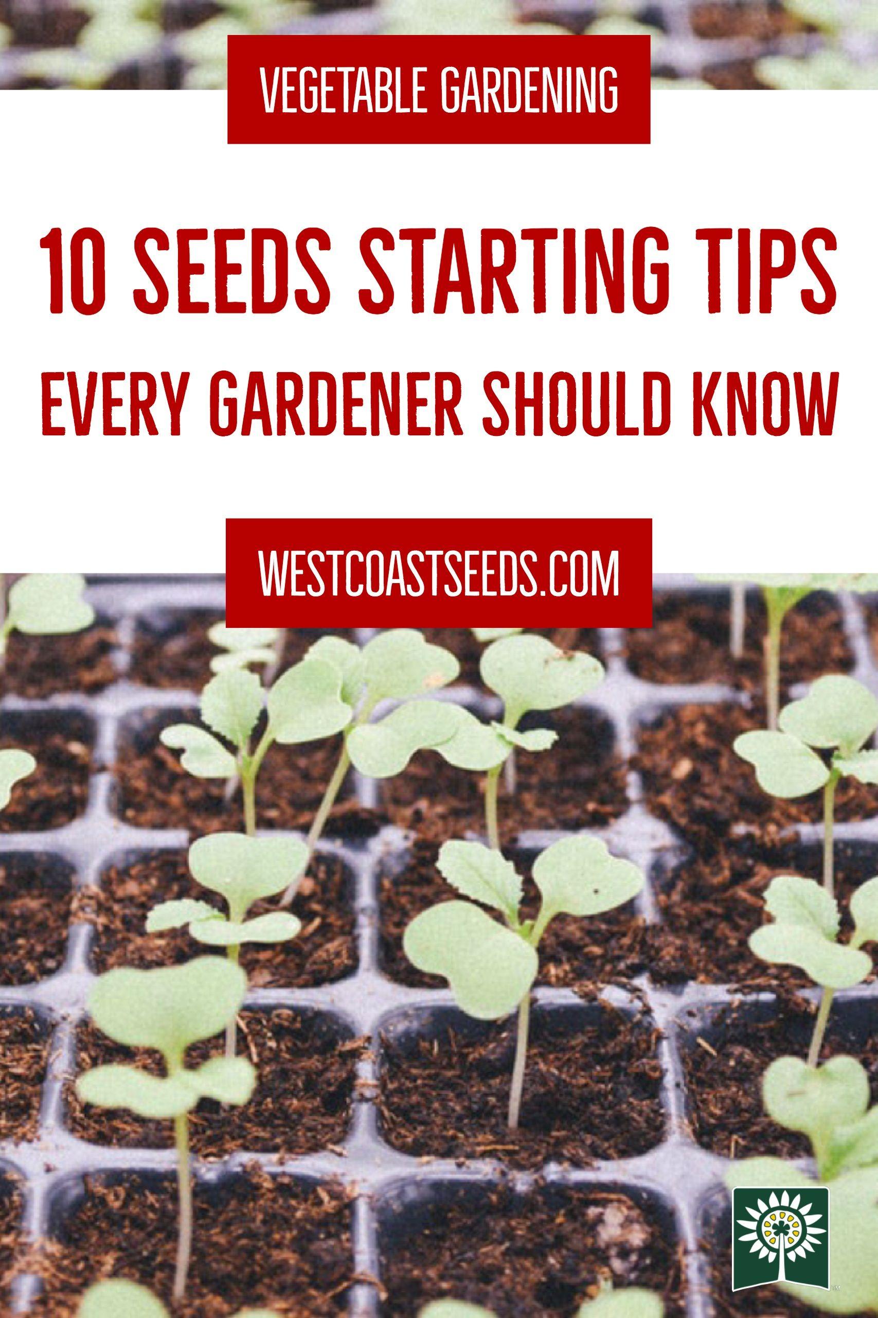 mark's ten seedling tips | gardening 101 | vegetable garden