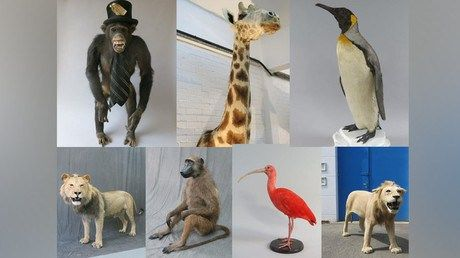 Beastly crime: 100k worth of stuffed animals stolen from London taxidermy warehouse http://ift.tt/1W8OOMQ   Police have requested information concerning the theft of 100000 (US$142000) worth of stuffed animals including two lions a giraffe and a chimpanzee in a top hat and tie stolen from a south London taxidermy warehouse.Read Full Article at RT.com Source : Beastly crime: 100k worth of stuffed animals stolen from London taxidermy warehouse  The post Beastly crime: 100k worth of stuffed…
