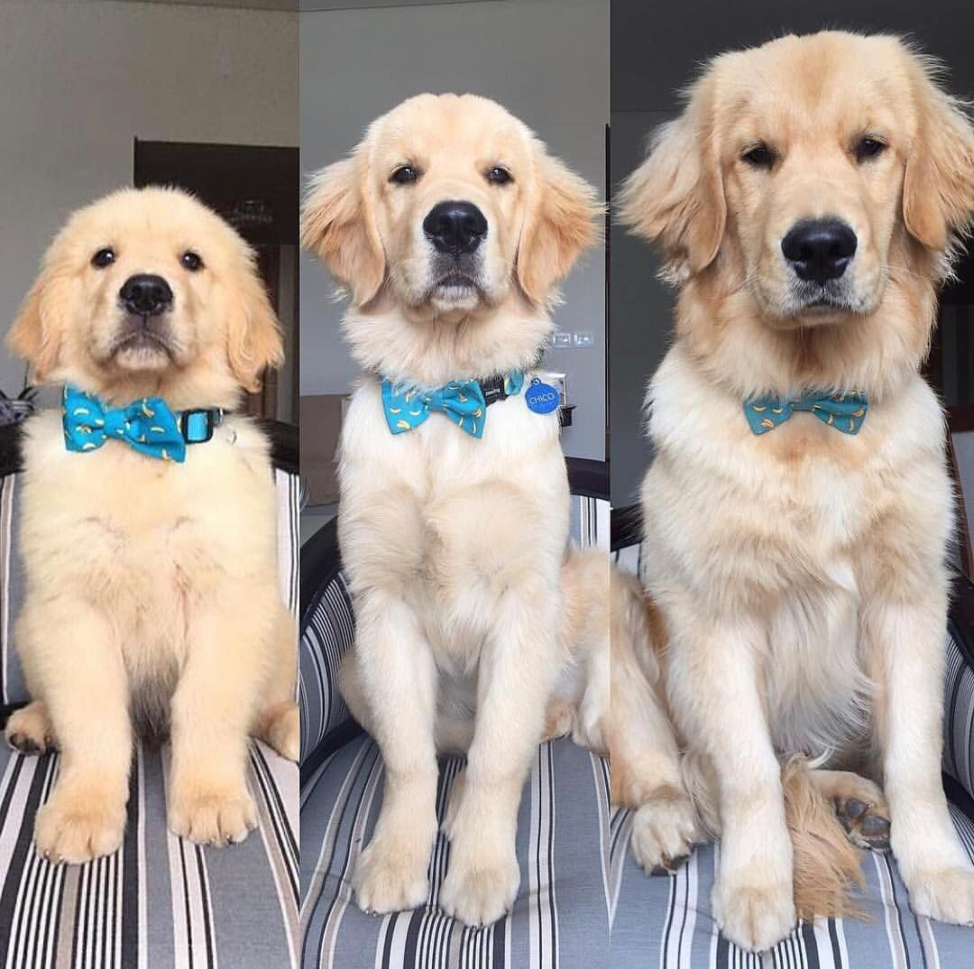 Indigo Pet Co On Instagram 10 Tittering Transformations Featuring Cute Animal Photos Cute Dogs Cute Animals