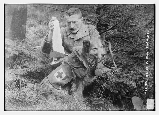 """""""Perro ambulancia"""" haciendo llegar vendas a un británico en la I Guerra Mundial"""