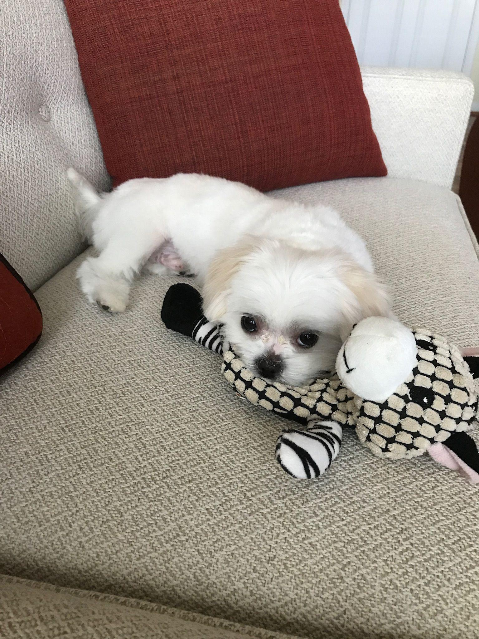Pin by Wendy Galinn on My MiKi Dogs, Animals