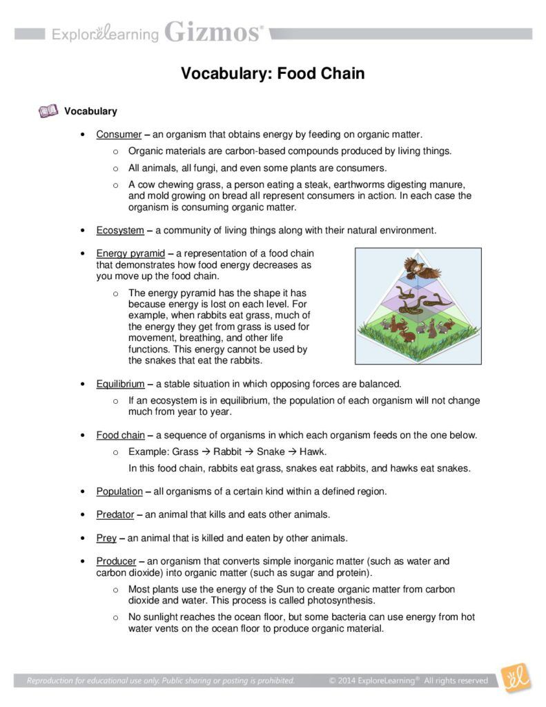 Food Chain Vocabulary Food Chain Worksheet Food Chain Symbiosis