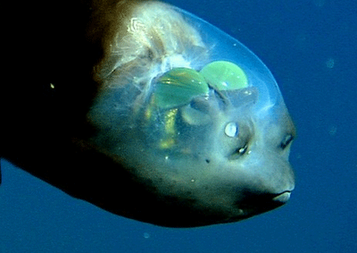 Weird Fish Head 3