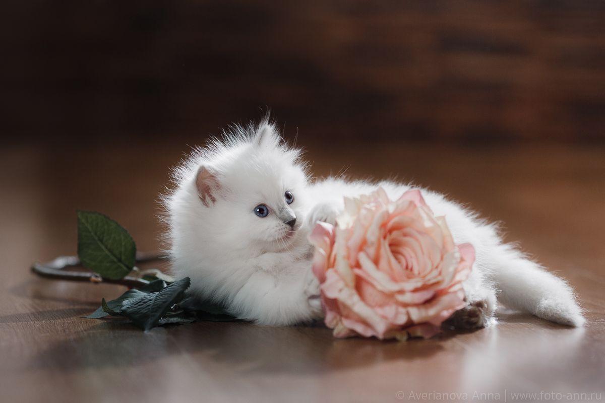 открытка с милыми животными какие