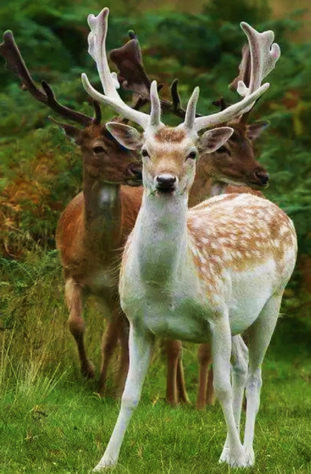 Fotografiya Animales De La Naturaleza Animales Extraordinarios Animales Jungla