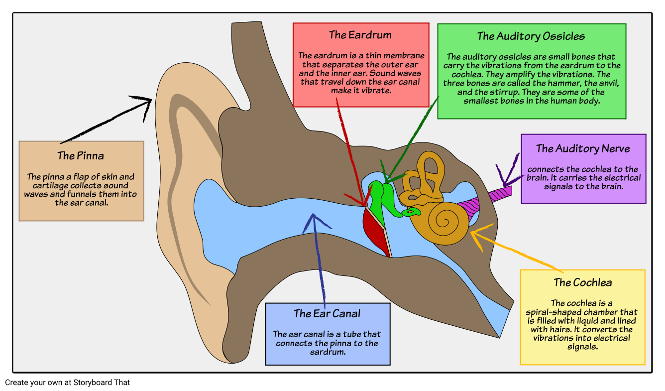 sound waves - structure of the ear: have your students label a diagram of a  human ear listing the different functions of each part