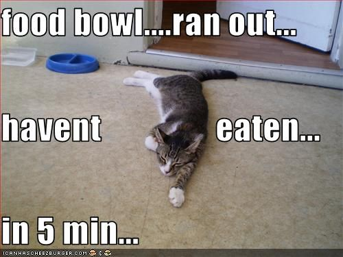 Food Bowl Ran Out Havent Eaten In 5 Min Silly Animals Cats Crazy Cats